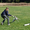 Flyball-046