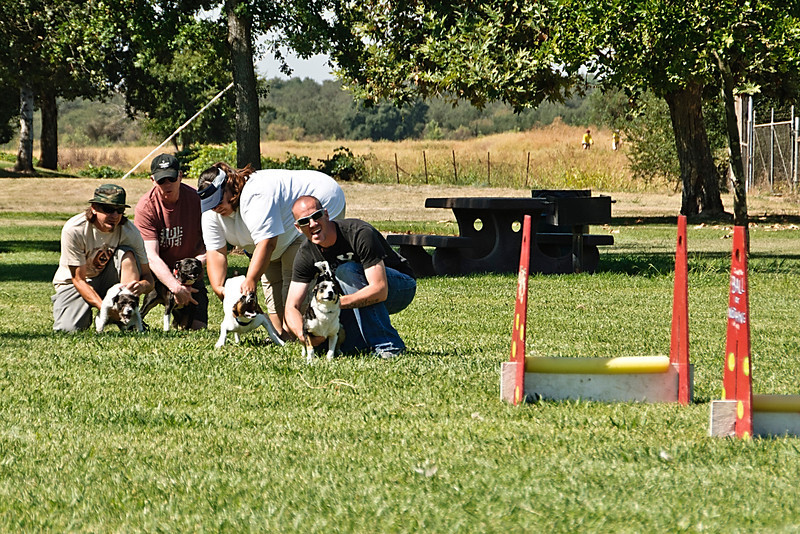 Flyball-184
