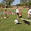 Flyball-072