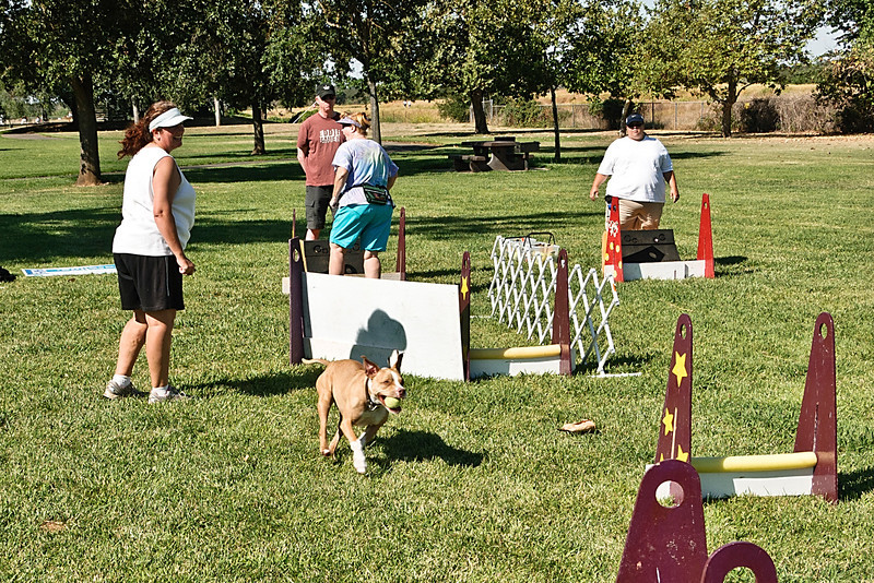 Flyball-130