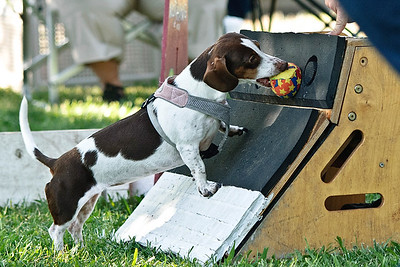 Flyball-007