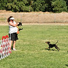 Flyball-104