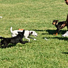 Flyball-100
