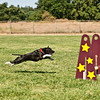 Flyball-191