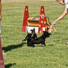 Flyball-103