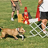 Flyball-060