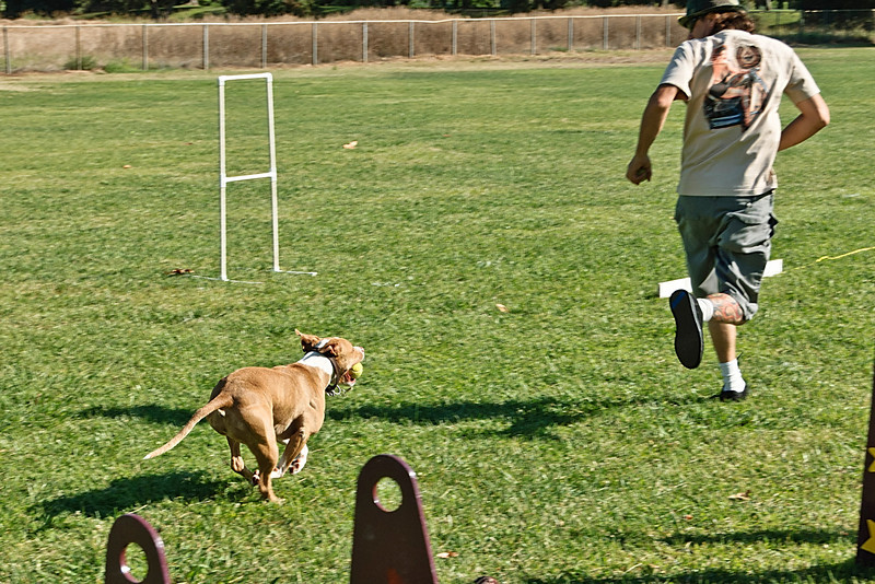 Flyball-063