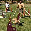 Flyball-137