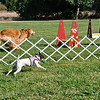 Flyball-048