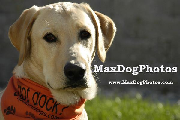 MaxDogPhotos