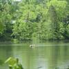 Bucolic Lake Hope
