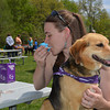Ashley Kinkelaar of Effingham enjoys a frozen treat as Rio, a mixed-breed, checks out the scene at the annual Bark for Life event.