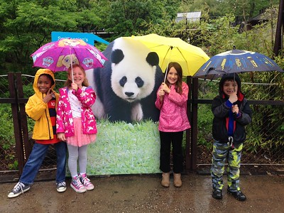 First Grade Zoologists Trek through the National Zoo