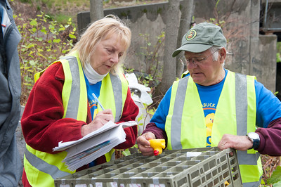 5000 rubber ducks vie to be first into Forestville Sunday at the Annual Pequabuck River Duck Race. Leo Bonola and Penny Critchley count the winning ducks. (Ray Shaw Special to The Press)