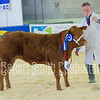 Reserve Champion Baby Beef P & S Sellers Lim x (no 48)