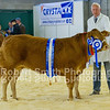 Overall Reserve Champion Limousin Heifer P & S Sellers (no 83)
