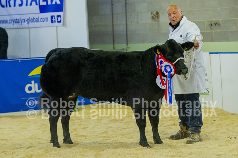 Overall Champion TA & LC Lyon & Son - British Blue x Heifer (no 61)