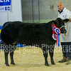 Overall Champion TA & LC Lyon & Son - British Blue x Heifer (no 61)