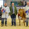 Champion and Reserve Heifer