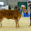 Reserve Champion Steer Limousin x Wilkinson & Marwood (no 33)