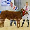Champion Baby Beef Morgan and Jones Lim x Heifer (no 45)