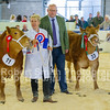 Champion and Reserve Steer