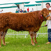 Interbreed Reserve and Champion Limousin from JM & SM Priestley