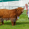 Highland Champion (no 217) from S and E Haley