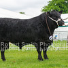 Champion Angus (no 279) from Gordon Brooke Estate