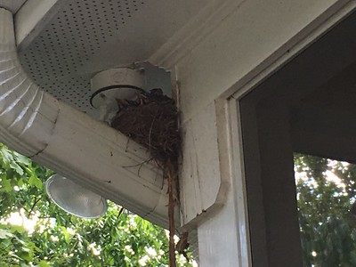 Our birds!