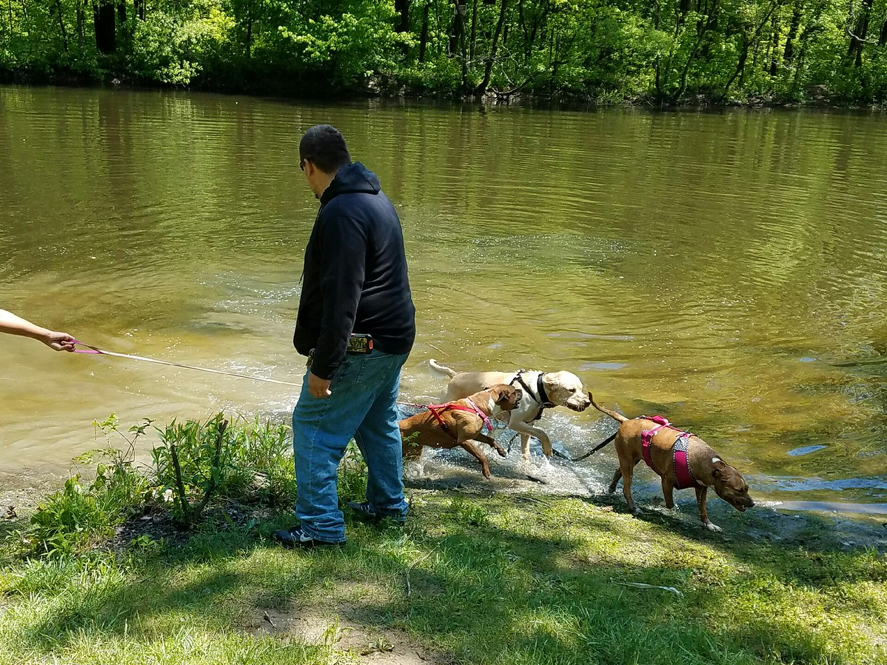 Lucas McCoy: Taking his pups for a hike and playing fetch in the pond.
