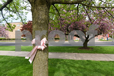 050817  Wesley Bunnell | Staff  Pink ribbons and signs are popping up around New Britain for the CT Breast Initiative 2017 Race In The Park which is taking place Saturday May 13. A ribbon appears in Franklin Square Park.