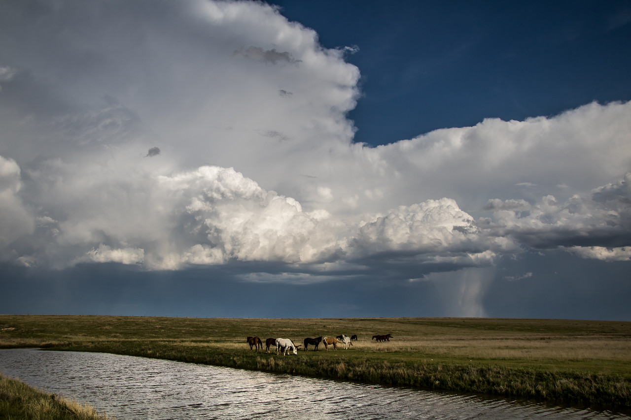 Horses and Storm, Armstrong County