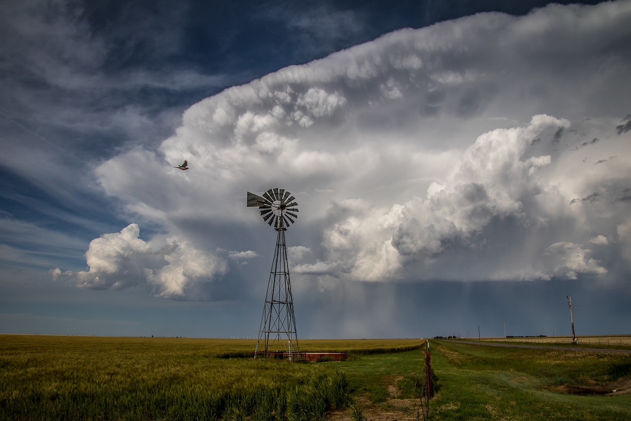 Wheat Field, Windmill, and Approaching Storm, Armstrong County