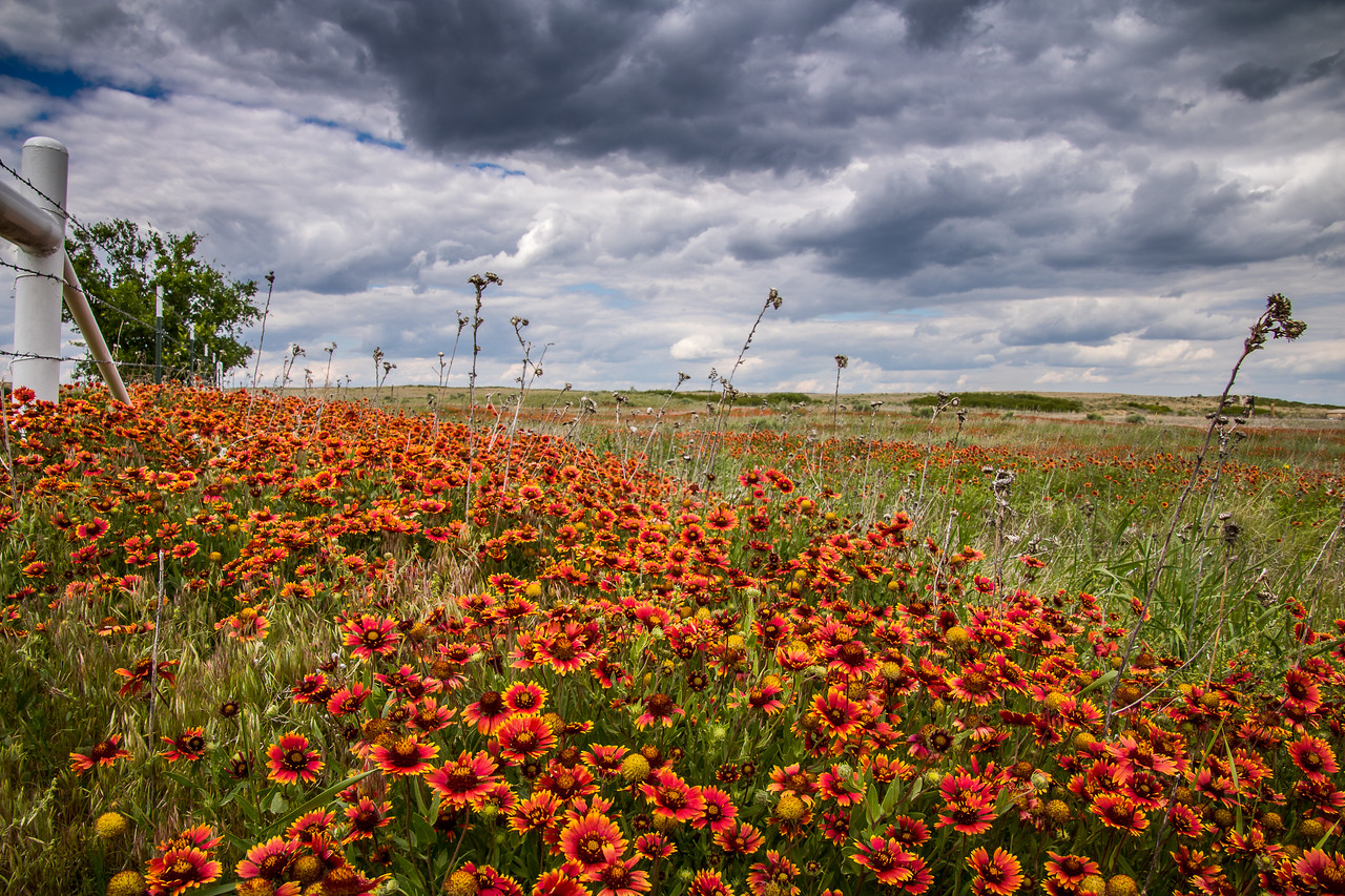 Wildflowers of Roberts County