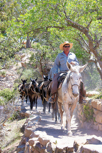 This is a supply team using mules to deliver supplies and water down the Bright Angel Trail