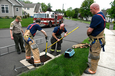 5/17/2018 Mike Orazzi | Staff Bristol fire fighters and animal control rescued  six ducklings from storm drains on Village Street in Bristol Thursday afternoon.