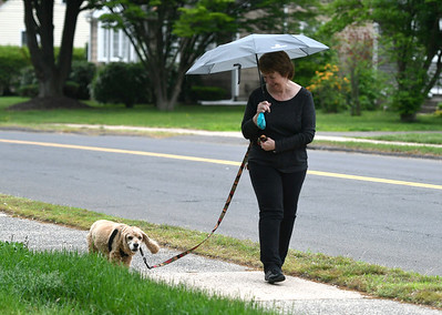5/22/2018 Mike Orazzi | Staff Shirley Charpenter walks her grand dog J.J. 13 1/5 along Louisiana Avenue in Bristol Tuesday afternoon.