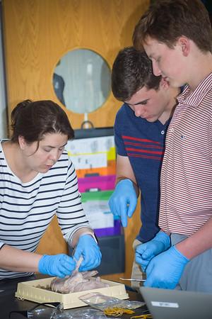Science Class Investigates Fetal Pig Anatomy (Graphic Content)