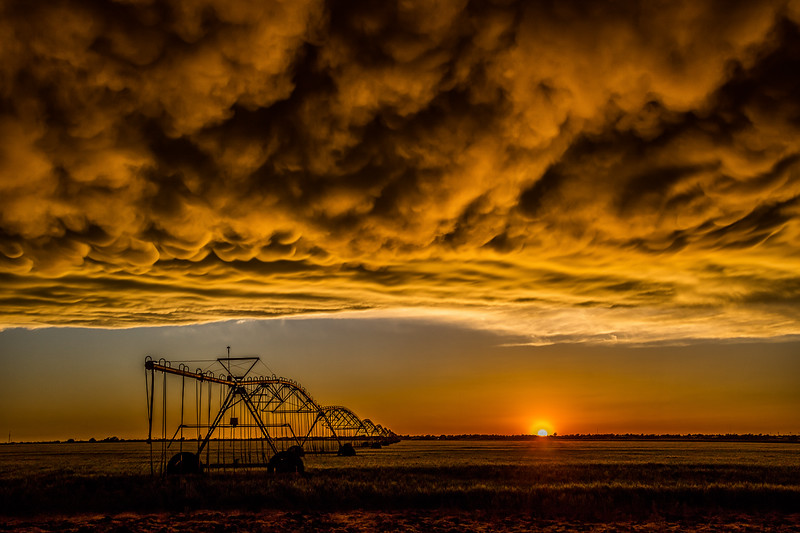 Mammatus Clouds Over Wheat Field