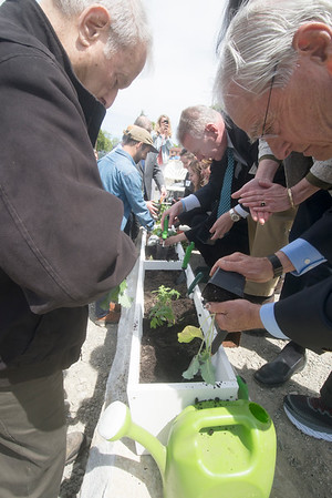 JIM VAIKNORAS/Staff photo Officials plant kale, tomatoes, and cilantro at the ground breaking of Hillside Center for Sustainable Living in Newburyport Friday.