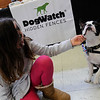 "TIM JEAN/Staff photo<br /> <br /> Kali Cuddy, 9, of Newburyport, meets ""Stanley"" a Boston Terrier during the Fido Fair at the Salvation Army in Newburyport.   5/12/18"