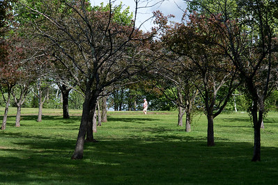 05/24/19  Wesley Bunnell | Staff  A walker is seen through a row of trees late in the afternoon on Friday.
