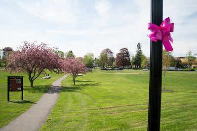 05/6/19  Wesley Bunnell | Staff  Pink ribbons tied to a light pole in Walnut Hill Park in advance of the CT Breast Health Initiative's Race in the Park.