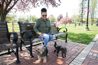 05/6/19  Wesley Bunnell | Staff  Mirta Ayala sits with her dogs Chloe & Cesear on a bench decorated with a pink ribbon in Walnut Hill Park on Tuesday afternoon in advance of the CT Breast Health Initiative's Race in the Park.