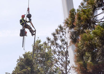A tree worker is lifted up on a crane Wednesday in Paradise. (Matt Bates -- Enterprise-Record)
