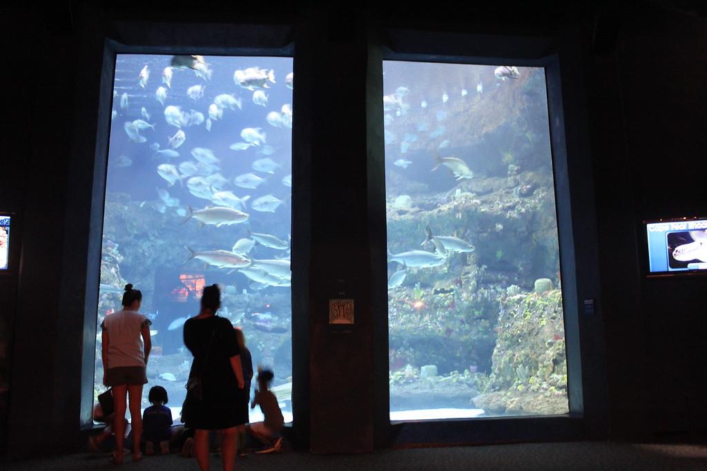 People stand in front of aquarium tanks at North Carolina Aquarium at Fort Fisher