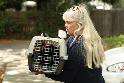 Mary Daguerre picks up her cat, Scout, from the Chico Hospital for Cats after patiently waiting outside in her car on Tuesday in Chico. (Carin Dorghalli -- Enterprise-Record)