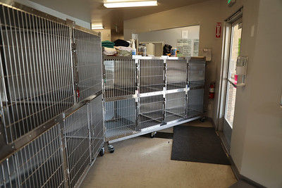 The Butte Humane Society Clinic is asking pet parents to drop off their pets in cages by the front door, then wait patiently outside while they are treated. This measure is to keep all involved safe from the coronavirus  Tuesday in Chico. (Carin Dorghalli -- Enterprise-Record)