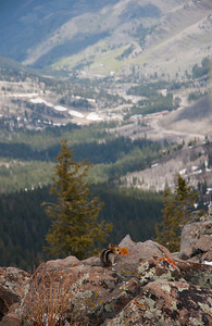 Summit Squirrel